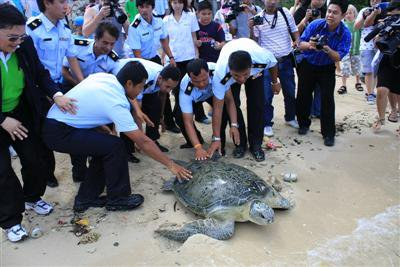 Freedom for giant turtle captured off Phuket | The Thaiger