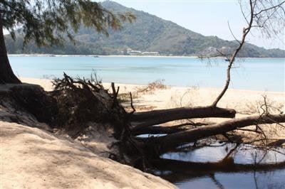 Phuket coast under threat: park chief | The Thaiger