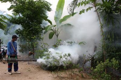Chikungunya cases in Phuket: 349 | The Thaiger