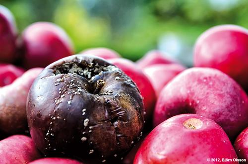 Phuket Finance: One rotten apple can spoil the whole barrel | The Thaiger
