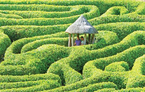 Phuket Gardening: A maze in a month? | Thaiger