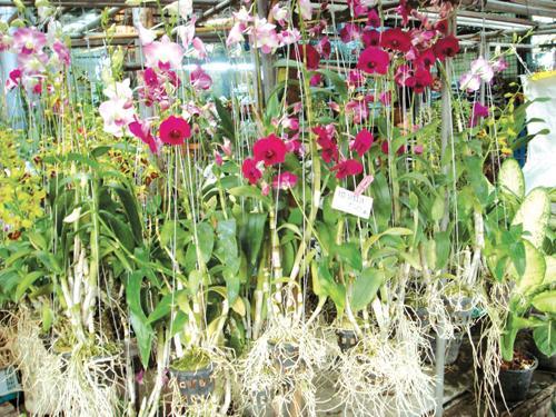 Phuket Gardening: Nursery education   The Thaiger
