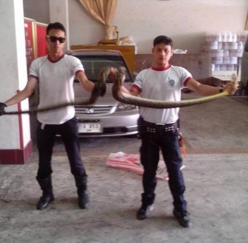 It's raining snakes in Phuket Town   The Thaiger