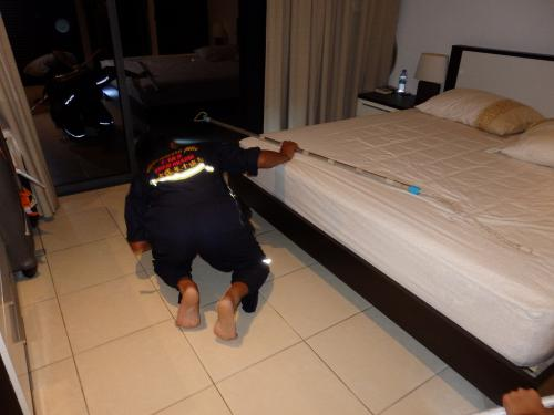 King cobra joins guest in hotel room, gets evicted [video report]   The Thaiger