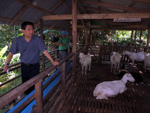 Governor eyes Phuket goat market potential [VIDEO]   Thaiger