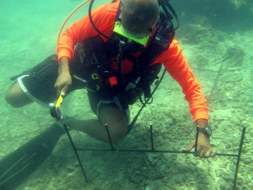 Phuket coral restoration begins as seawalking continues | The Thaiger