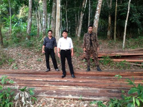 Phuket raid uncovers illegal logging camp | The Thaiger