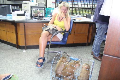 Russians nabbed touting macaque monkeys off Phuket | The Thaiger