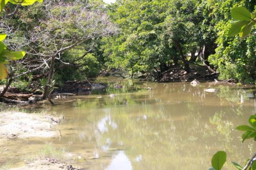 Rawai Municipality takes charge of one of many environmental issues plaguing Racha | Thaiger