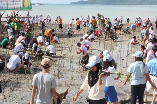 Phuket plants 24k mangrove seedlings to honor HM Queen Sirikit | The Thaiger