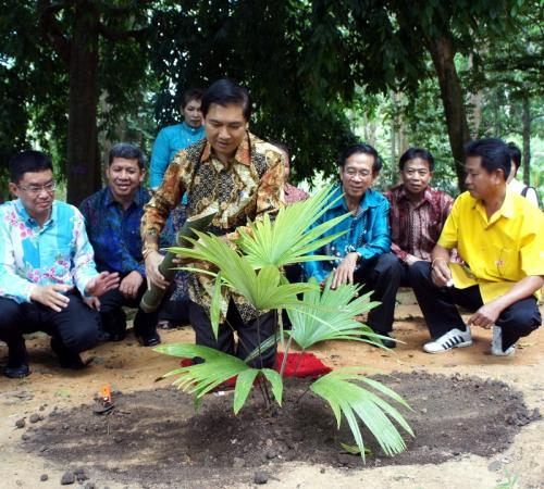 Teachers, students plant rare species of palm in Phuket National Park   Thaiger
