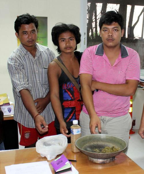 Phuket kratom arrests continue as nation ponders decriminalizing the leaf   The Thaiger