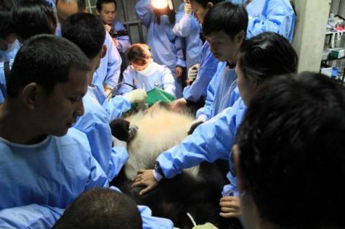 Phuket Gazette Thailand News: Floods hit, more rain coming; High hopes for baby panda; Govt urged to consider BRN proposal | The Thaiger