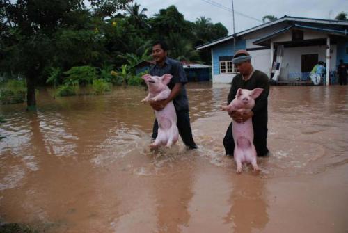 Phuket Gazette Thailand News: Threat from typhoon eases [VIDEO] | Thaiger