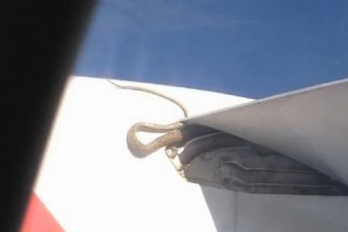 Snake hitches ride on Qantas flight to Papua New Guinea | Thaiger