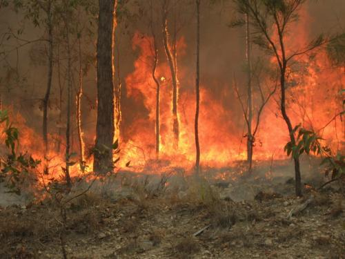 World News: Fire fears as temperatures soar in New South Wales | Thaiger