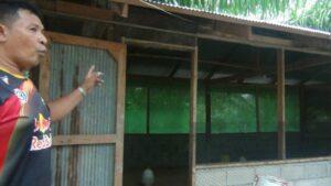 Chicken deaths make Krabi villagers nervous | News by The Thaiger