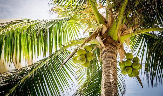 Top 10 reasons to add some coconut into your life | The Thaiger