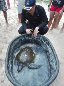 Injured turtle found at Nai Harn Beach   News by Thaiger