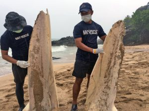Dead whale and dolphin washed up on Koh Lanta | News by Thaiger