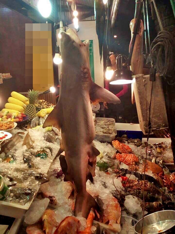Marine and Coastal Resources check for protected shark meat in Karon | The Thaiger