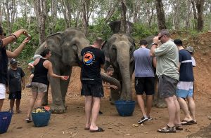 A day that I will treasure forever - visit to the Elephant Jungle Sanctuary Phuket | News by Thaiger