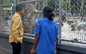 Phuket Governor visits dog shelter to check on renovations   News by Thaiger
