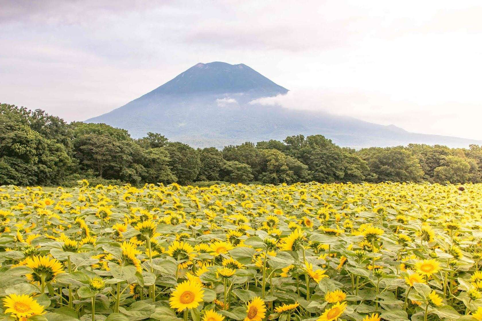 Global Hotel Brands boosts Japan's Niseko tourism | The Thaiger