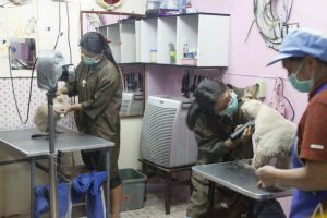 How much would you pay to get your dog groomed? 2800 baht?! | News by Thaiger