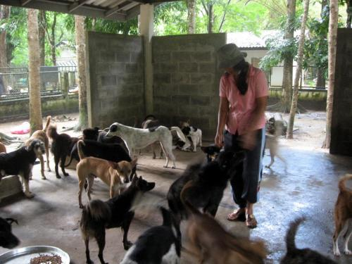 Phuket's Governor follows up on stray dog shelter renovations | The Thaiger