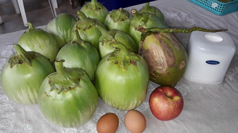 ฮือฮา มะเขือยักษ์ ผลโตเท่าลูกมะพร้าวน้ำหอม เกษตรอำเภอเกาะลันตา ไอเดียเจ๋ง ปลูก แจก ผลเดียวกินพอทั้งครอบครัว | The Thaiger
