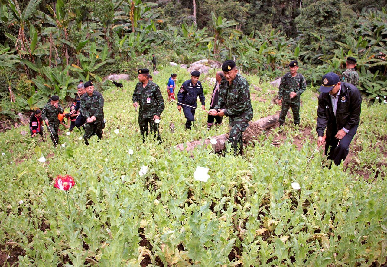 "Thailand's opium cultivation ""down by 40%"" 