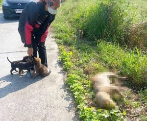 Puppies rescued from roadside | News by Thaiger