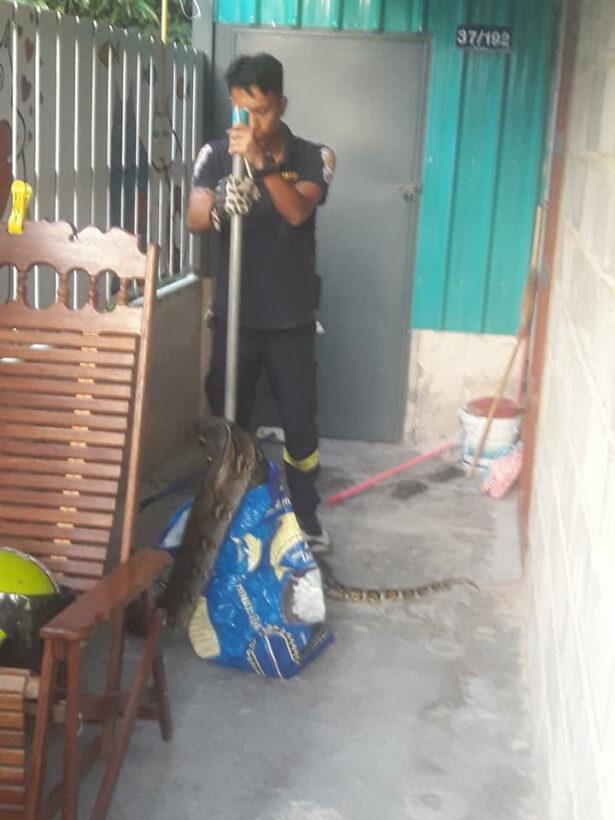 หวิดช็อก! ตาวัย 70 ปี ได้ยินเสียงสุนัขเห่า ออกมาดู ต้องตะลึงกับงูเหลือม ขนาดใหญ่นอนขวางประตูบ้าน | News by The Thaiger