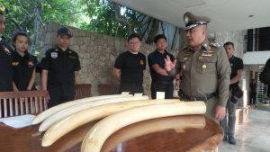 A raid at alleged poacher Premchai's house in BKK nets weapons, ivory | News by Thaiger
