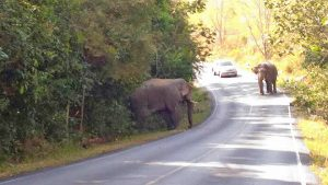 Lost tusk in pachyderm punch-up | News by Thaiger