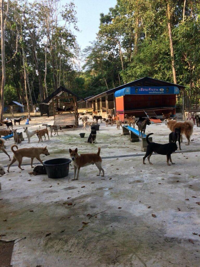 ภูเก็ตเร่งฟื้นฟูบ้านพักพิงสุนัขจรจัด จัดสรรงบกว่า 8 ล้านบาท พร้อมปรับปรุงภูมิทัศน์และสุขอนามัยให้สวยงาม   News by The Thaiger