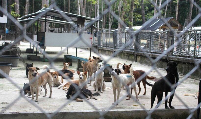 Rabies: Genuine outbreak or misinformed panic? | The Thaiger