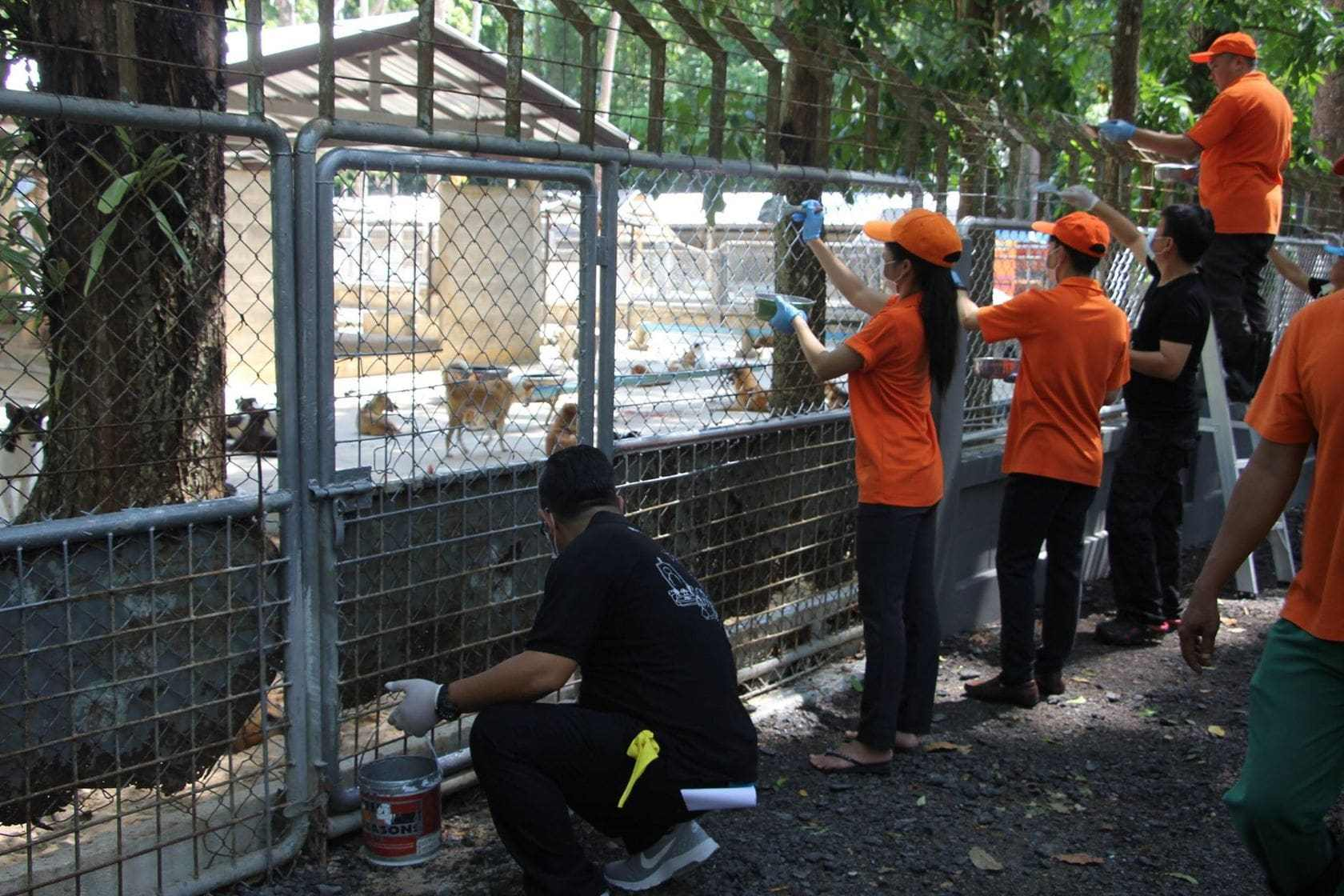 Governor rolls up his sleeves in a clean-up day at Phuket's stray dog shelter | The Thaiger