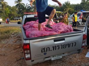 Kratom delivery kills two   News by Thaiger