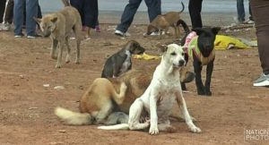 Accelerating Rabies vaccinations in Trang | News by Thaiger