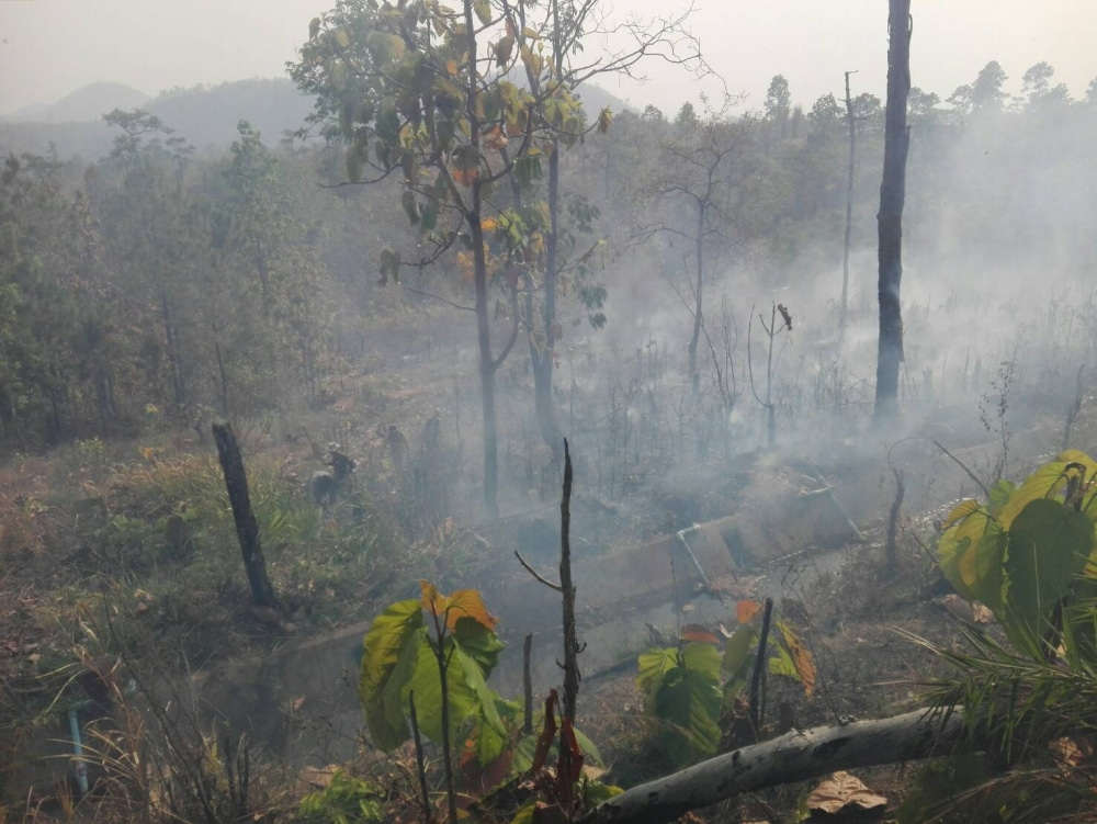 Torching hornets nest causes 20 rai forest fire in Mae Hong Son   News by Thaiger