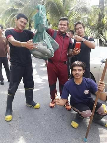 4.5 metre King Cobra captured in Karon   News by Thaiger
