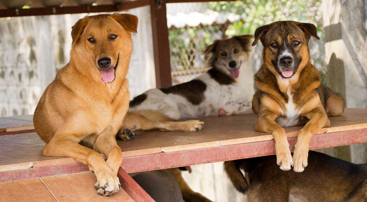 Pet registration on the way | The Thaiger