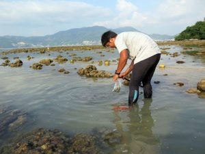 Black wastewater threatens to destroy Patong's restored coral reefs | News by Thaiger
