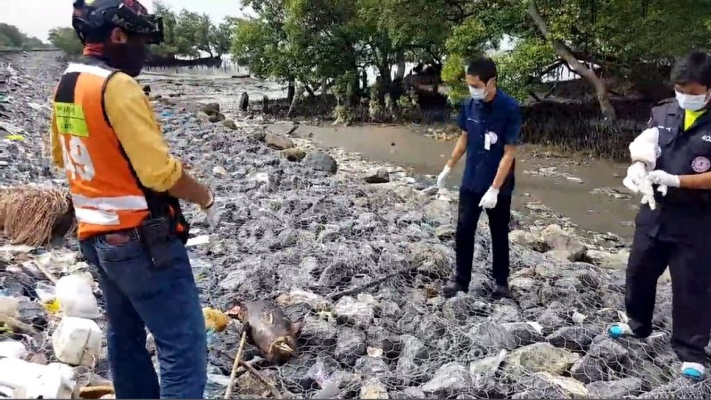 Boat propeller strike suspected death of baby dolphin - Samut Prakan   News by Thaiger