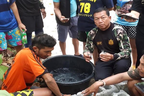 เฮ!!ลูกเต่าที่เกาะสิมิลันฝักเป็นตัวรังแรกรอด 77 ตัว พร้อมปล่อยคืนสู่ทะเล   News by The Thaiger