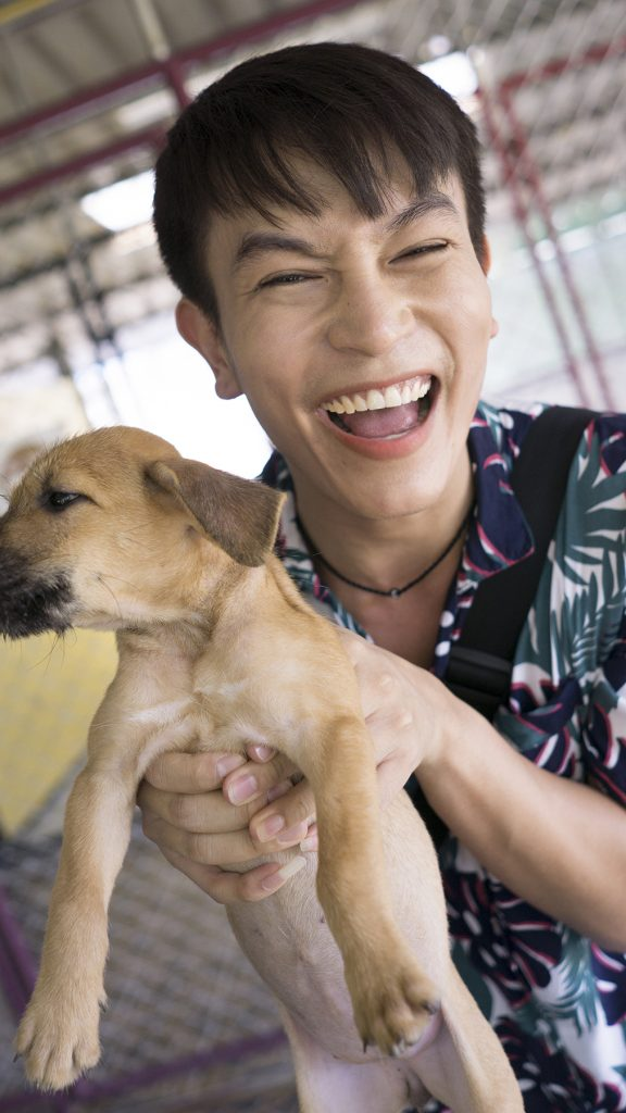 Soi Dog Saturday Opening Tours – come and meet your future best friend   News by Thaiger