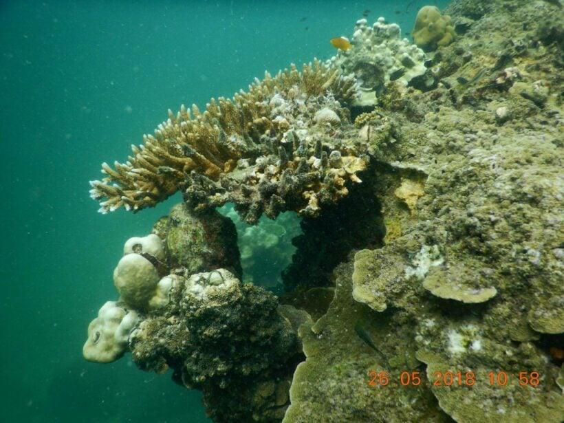 Coral bleaching found off Krabi | The Thaiger