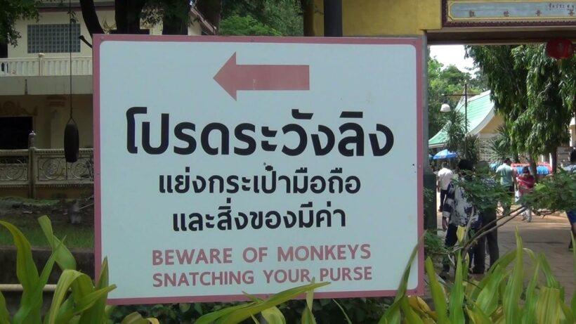 วัดถ้ำเสือ ขึ้นป้าย 3 ภาษา ห้ามให้อาหารลิง เพื่อป้องกันลิงทำร้ายนักท่องเที่ยว | The Thaiger